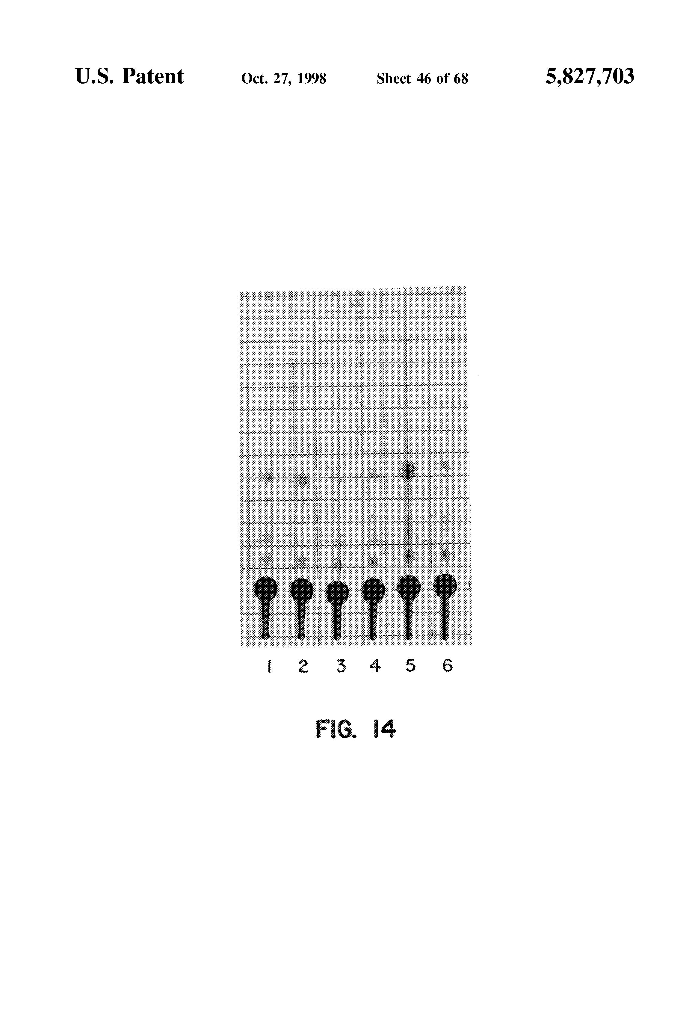 papilom tranzitor