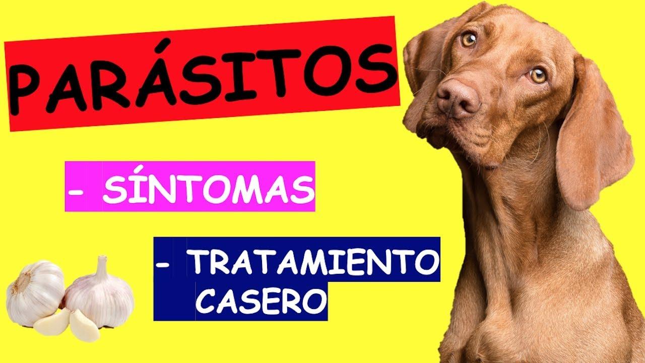 parasitos oxiuros perros hpv neck tumor