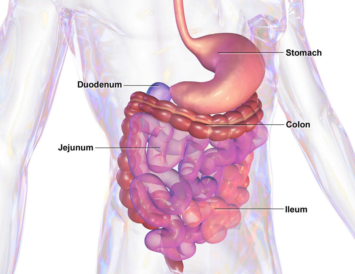 paraziti stomacali