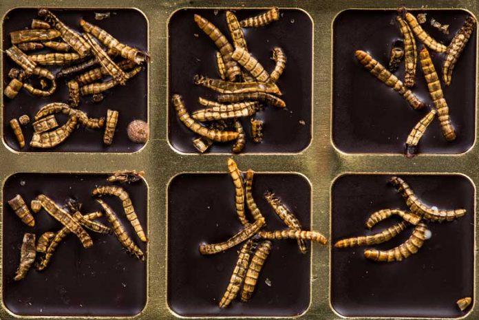Oameni care trăiesc doar viermi - Cum să aducă viermi la vârsta adultă Cum să aducă viermi acasă?