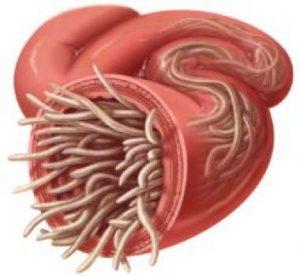 Paraziti u crijevima lijek Hpv virus vrouwen