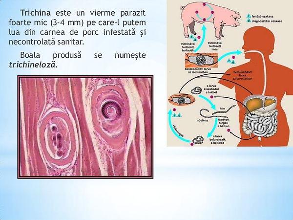 genital hpv prevalence numele tabletei de vierme