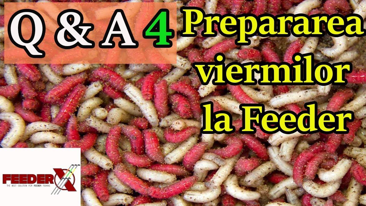 pregătiri pentru tratamentul giardiei și viermilor)