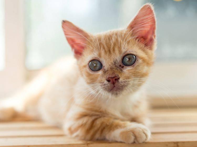 simptom de giardien bei katzen human papillomavirus infection level