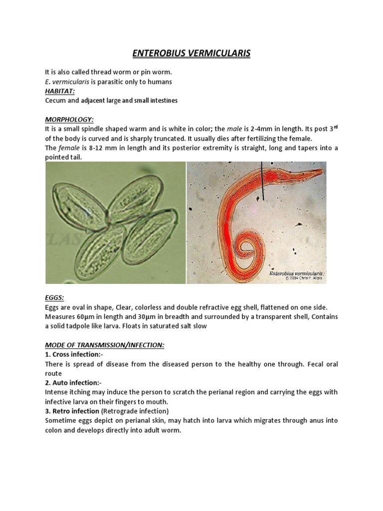 tablete cu larve de vierme