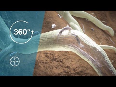 tratamentul simptomelor helmintiazei umane papiloame și alunițe