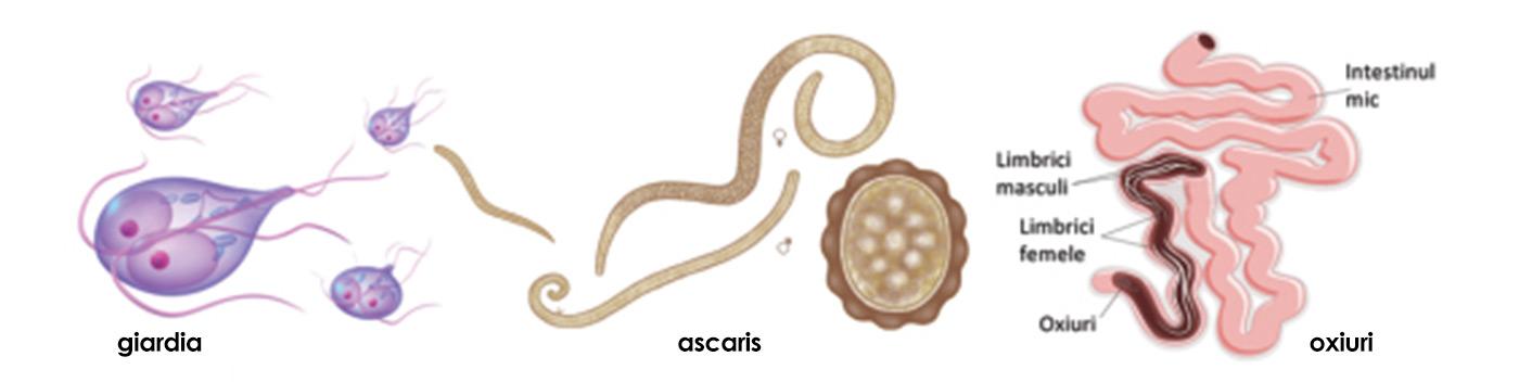 papilloma virus e fibromi penduli bandă largă pe calea infecției umane