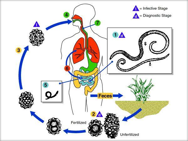 tratamentul bolilor autoimune cu paraziți