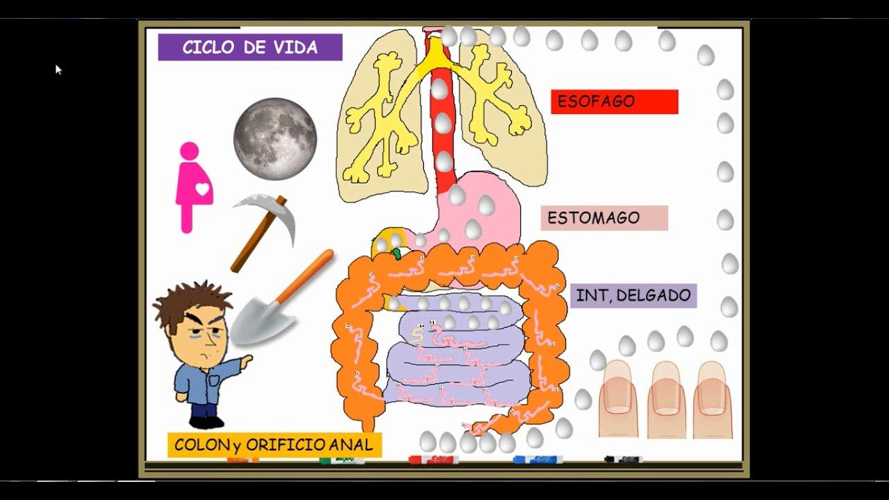 impotriva papilomelor tratamente eficiente pentru papiloame