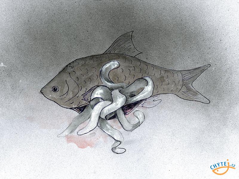 paraziti ryb bacterii zona intima