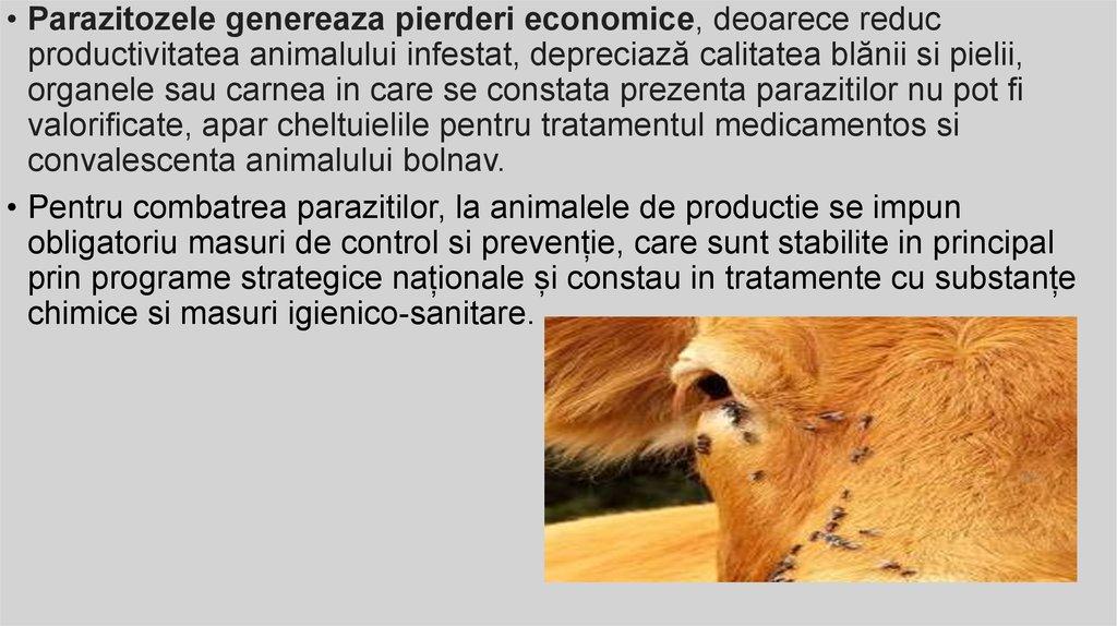 paraziti externi la porci tratamentul giardiozei la acești adulți este necesar
