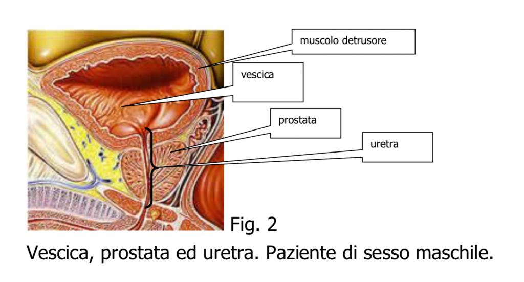 tratament avansat al helmintiazei pastile de vierme gideon richter