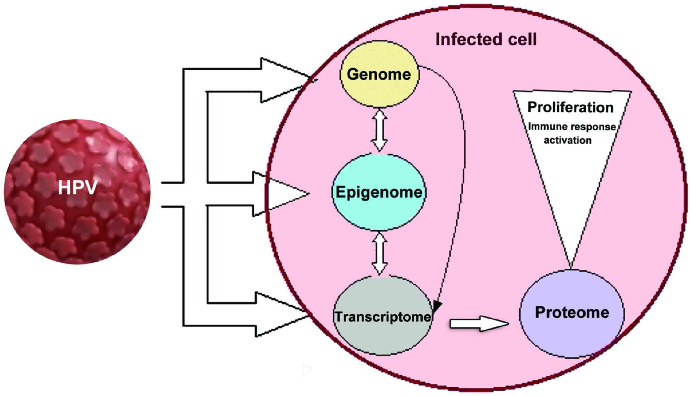 papillomaviridae cdc tipuri de tratament pentru viermi umani