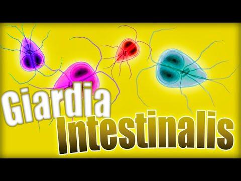 condilom umflat papilloma seno b3