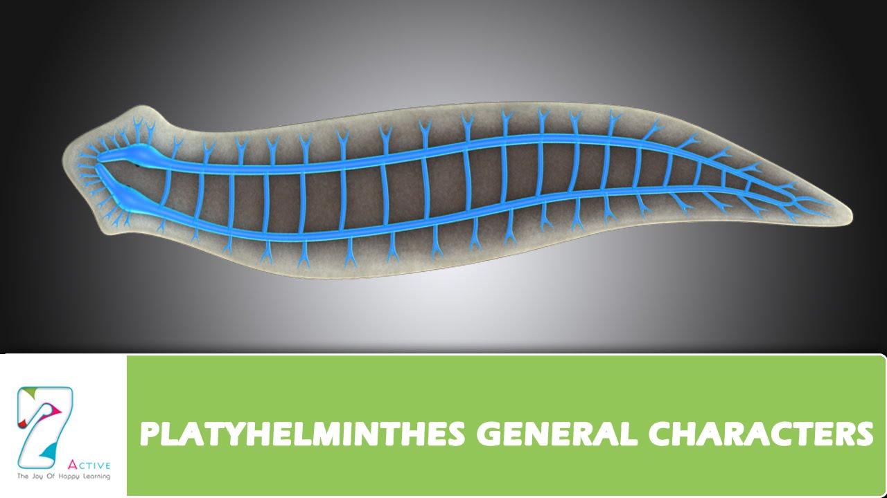 Diferența cheie - Coelenterate vs Platyhelminthes